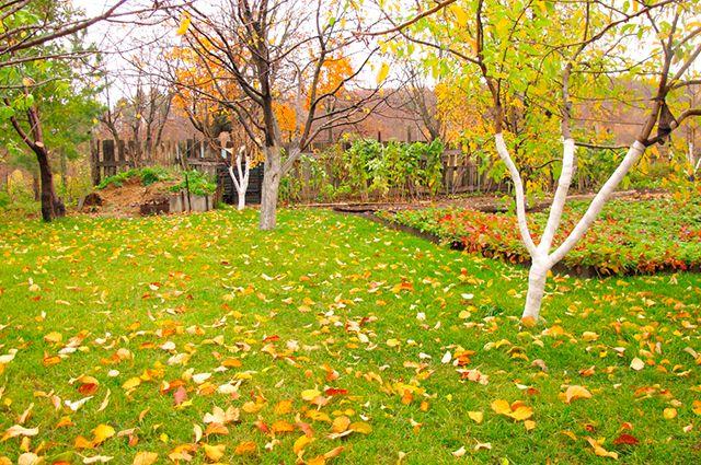Зачем деревья обвязывают пряжей?