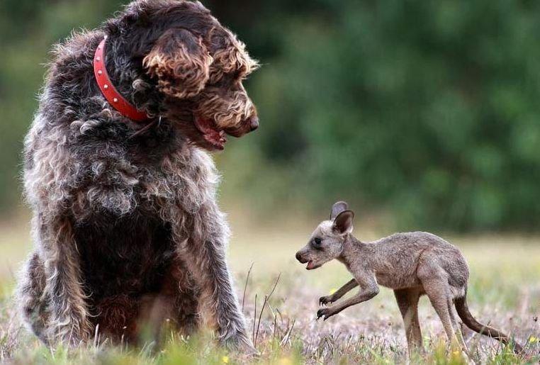 Забавные пары животных. Мегаподборка.