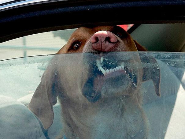Мучительная смерть в машине