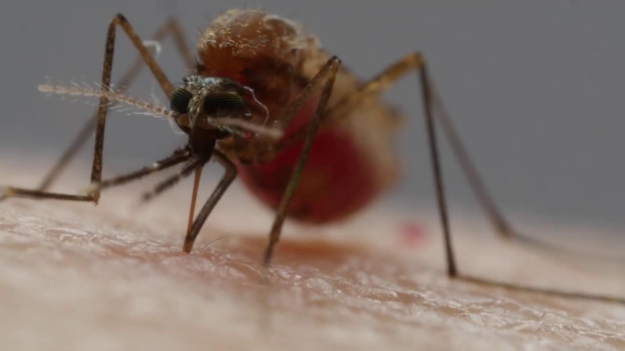 Как поймать комаров и не дать им размножаться
