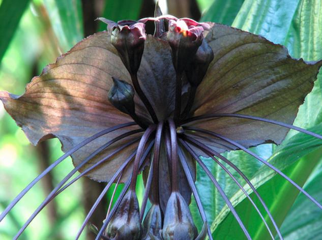 Самые невероятные и экзотические растения со всего мира