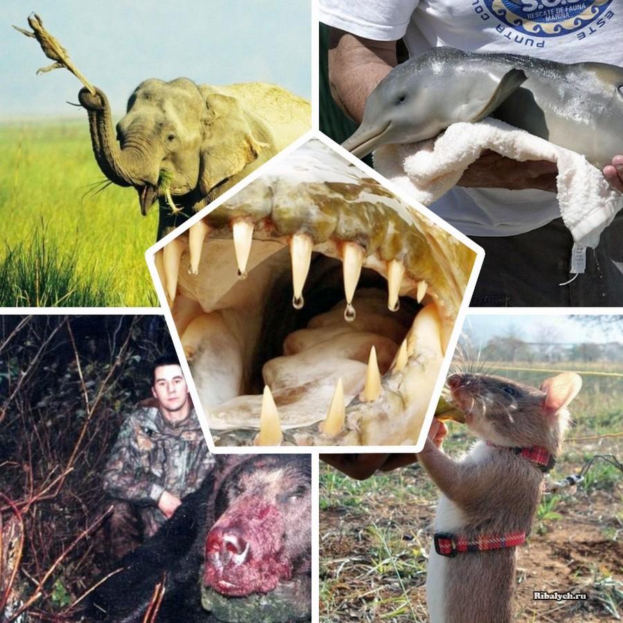 10 новостей о животных котор…