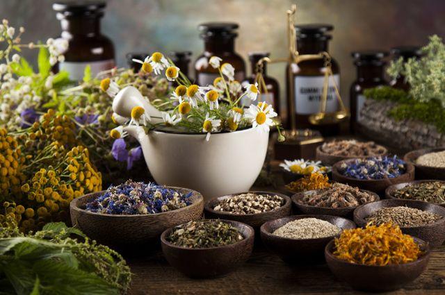 Лекарственные растения: 50 р…