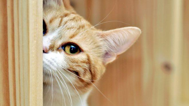 Непослушный малыш: почему ваш котик плохо себя ведет?