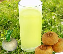 Репа огородная полезные свойства, фото трава. Польза и вред сок, отвар плод