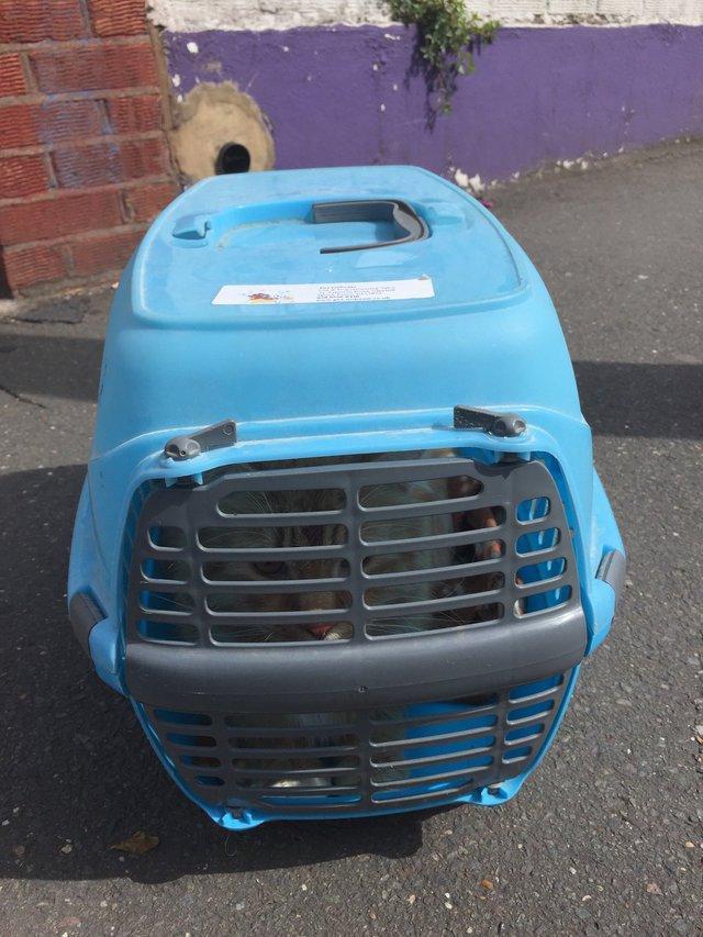 Причина по которой этого кота выбросили вместе со всеми его вещами на улицу, мягко говоря, удивляет!