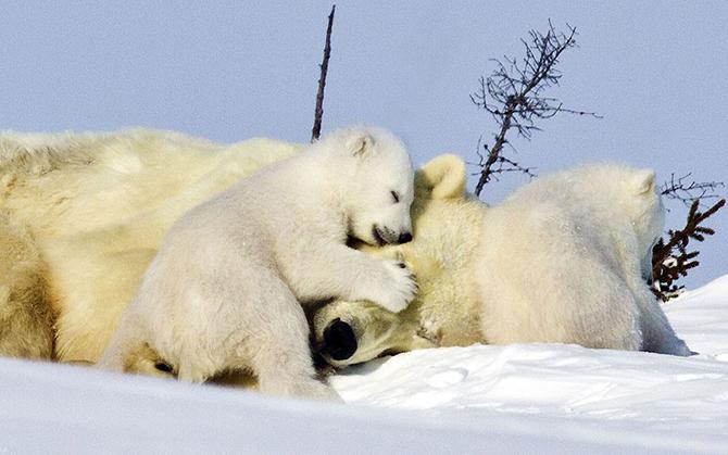 Лучшие фотографии животных от Daily Telegraph
