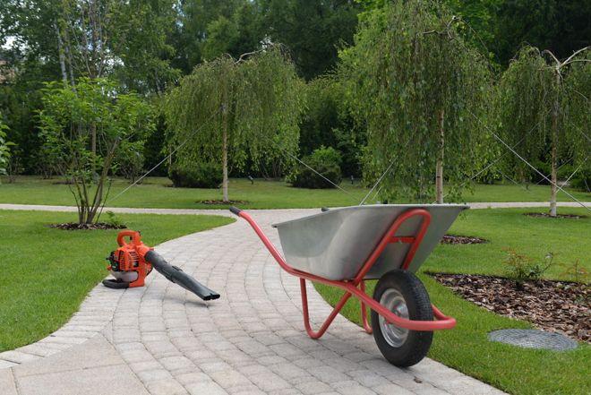 Зрелый сад: Как организовать уход за деревьями