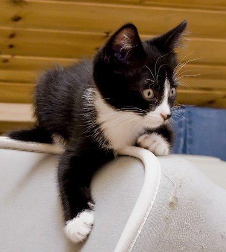 Вяжем прямо на пороге, приключения кота
