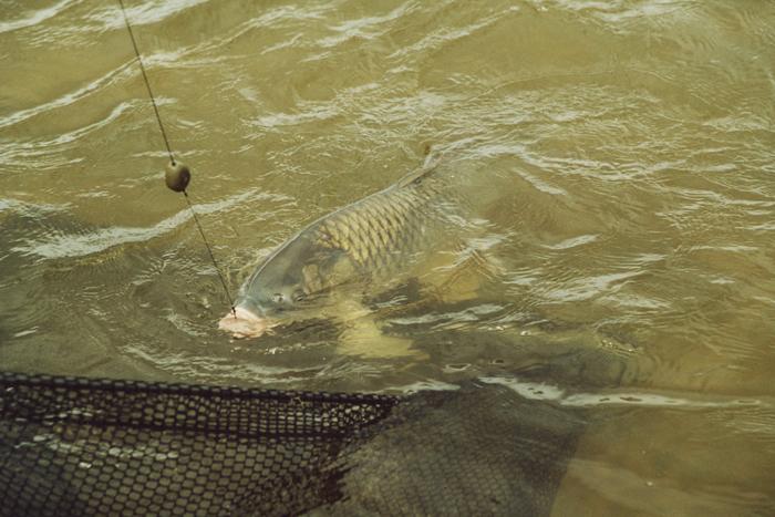 можно ли ловить рыбу во время нереста на удочку с одним крючком
