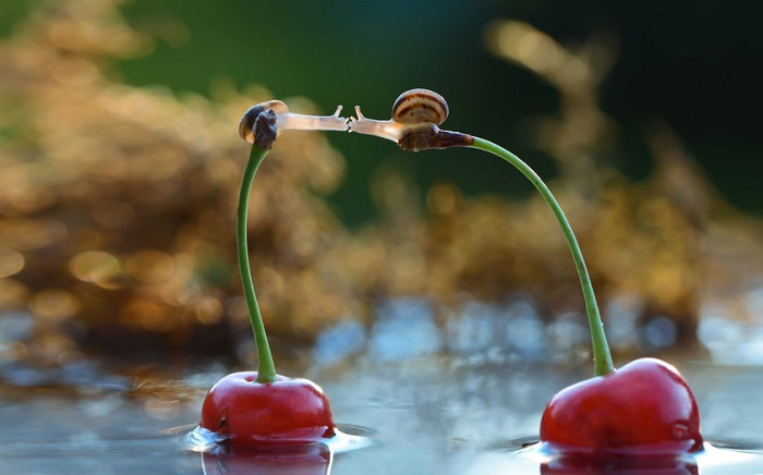 Поцелуй улиток на вишне.