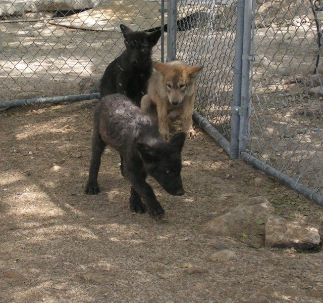 Женщина спасла трёх щенков в…