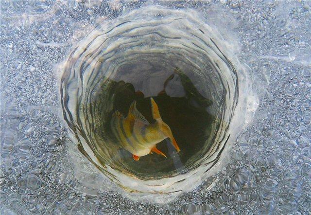 что надо чтобы рыба клевала