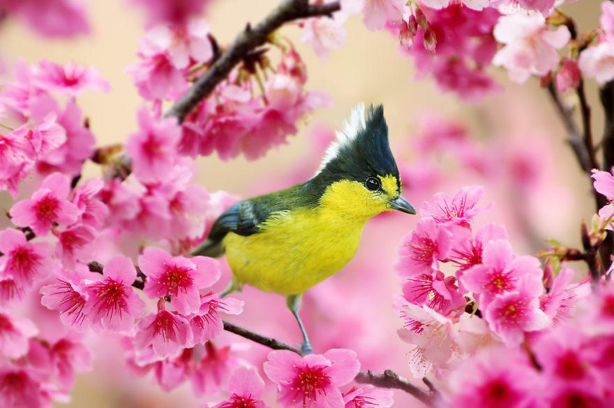 Красочные цветы и птицы Сью Хсу