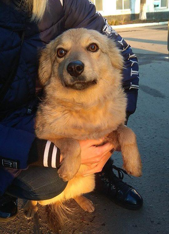 «Она ведь никого не трогает!» Сосед объявил охоту на бездомную собаку, но к ней пришла неожиданная помощь