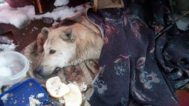 Бездомный пёс лежал в парке и тихо умирал от ранений… Люди шли мимо…