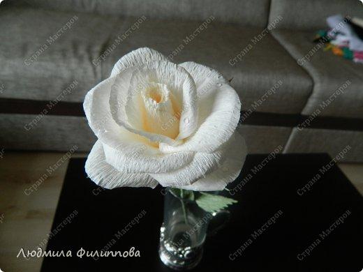 Белая роза из гофрированной бумаги