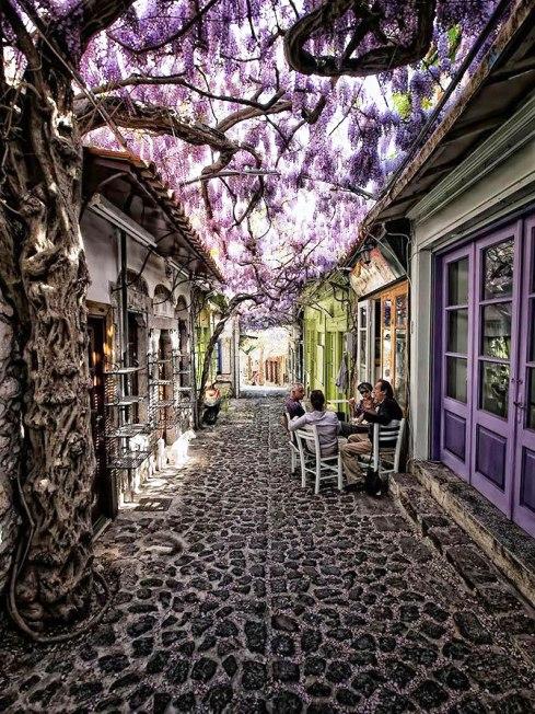 Весна идет — фото потрясающе красивых улиц в тени цветущих деревьев и лиан