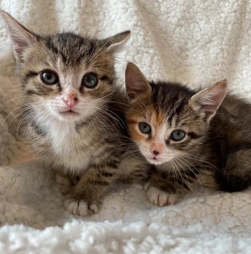 Котенок с двумя лапами цеплялся за сестричку, боясь упасть. Особенные малыши больше не могли жить на улице