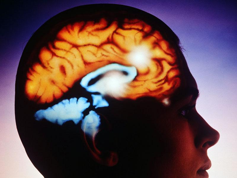 Три истории жизни без мозга