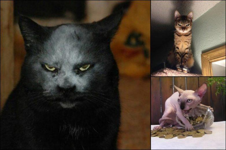 Коты-сатанисты