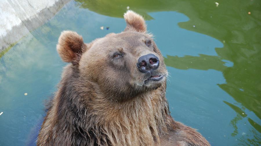 Целебный поцелуй медведя