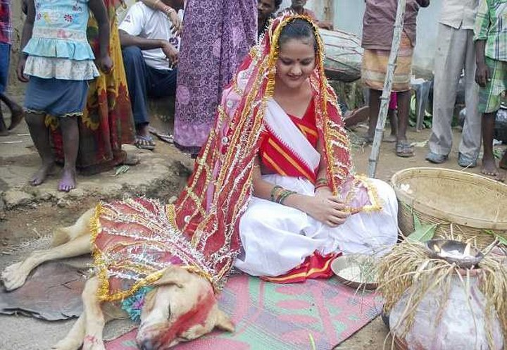 Индийскую девушку выдали замуж за бродячую собаку