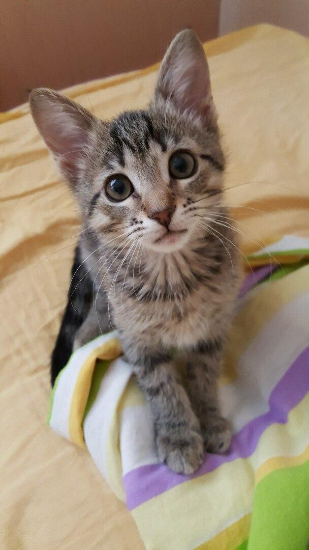 Котёнок-тигрёнок просится домой!!!