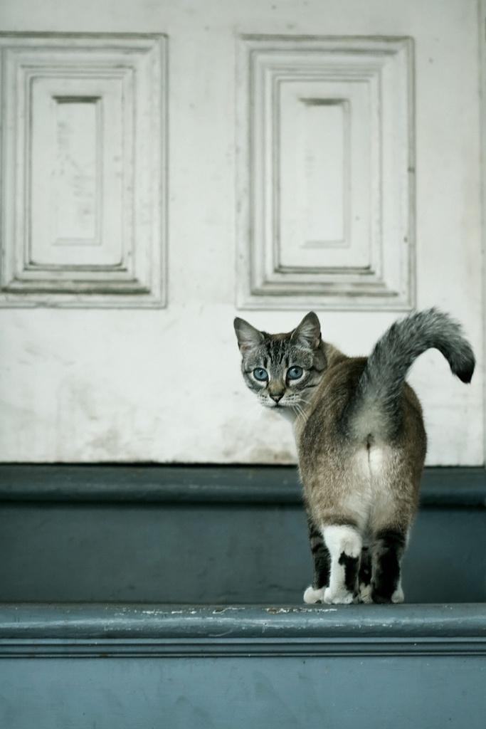 15 способов, которыми кот признается вам в любви Original