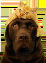 znakomim cat and dog2