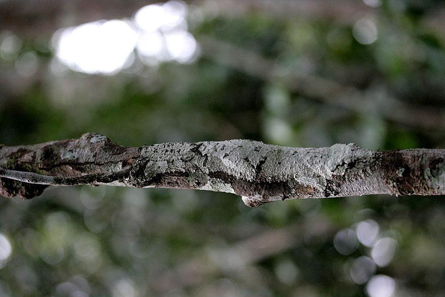 Camouflage02 Животные   мастера маскировки
