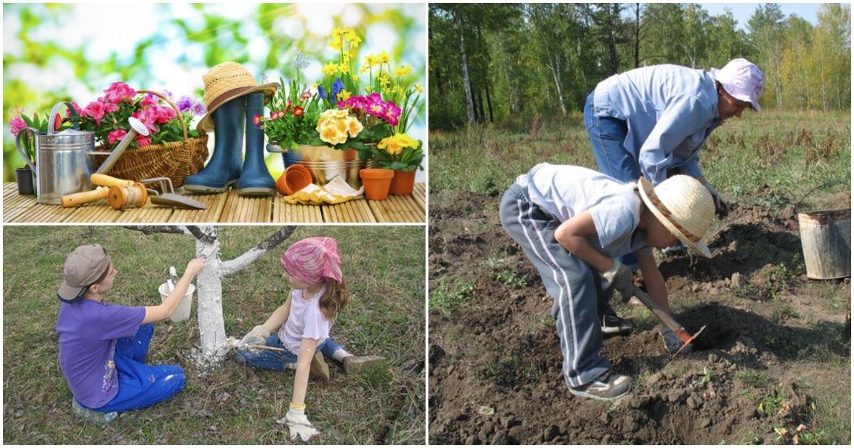 Вот чего нельзя делать весной на приусадебном участке: 10 ошибок садоводов и огородников