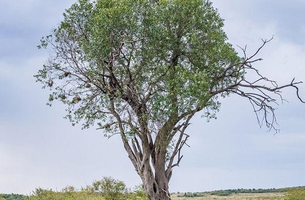 Фотограф случайно создал загадку со скрывающейся на дереве совой