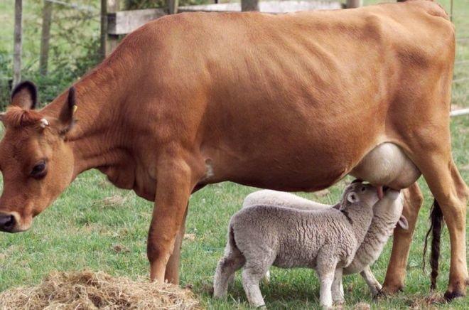 Чужих детей не бывает: 30 трогательных кадров из жизни животных животные, мимишность, фотографии