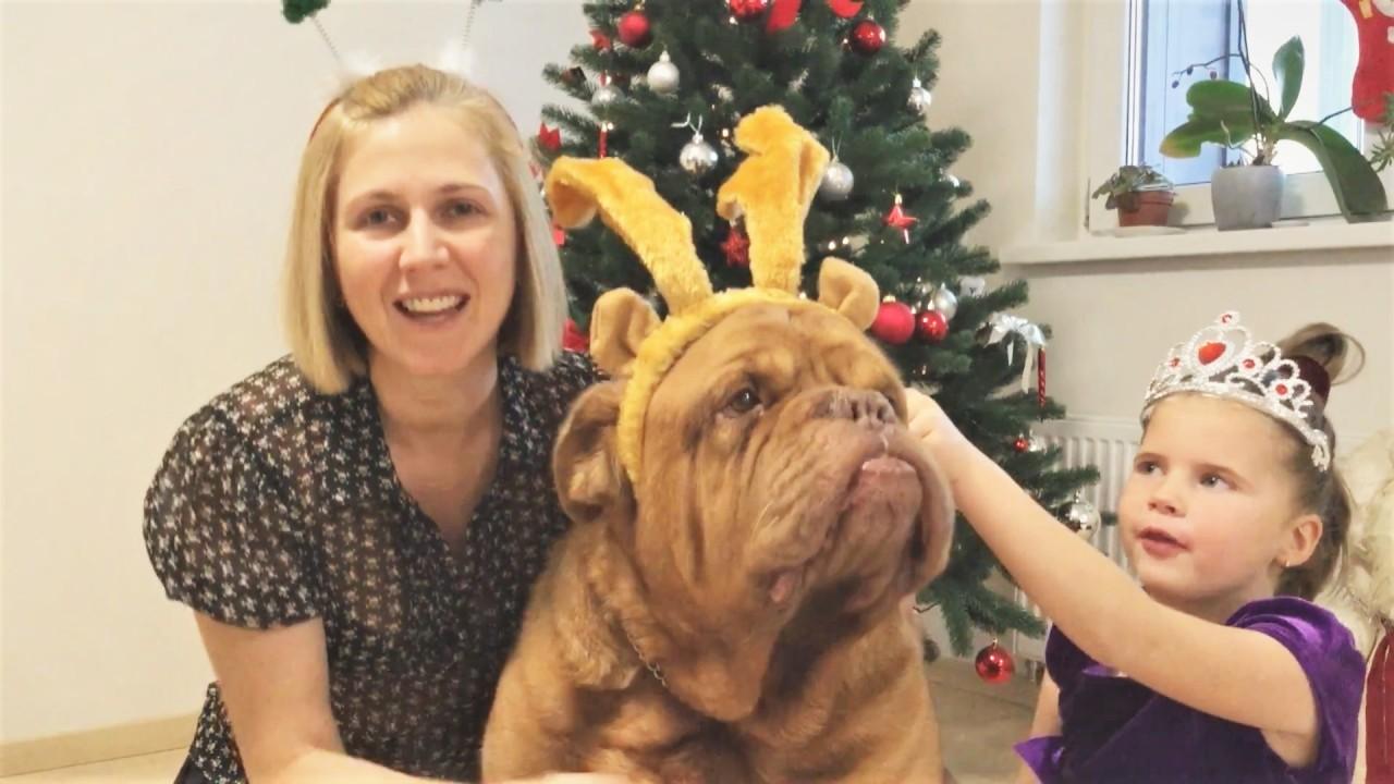Новогодние приколы с животными 2018