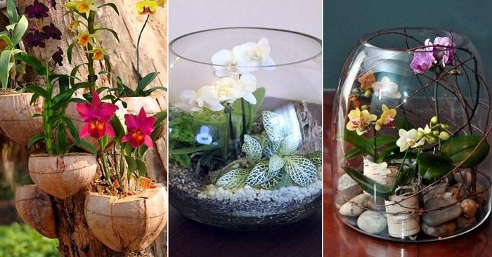 орхидеи в домашних условиях