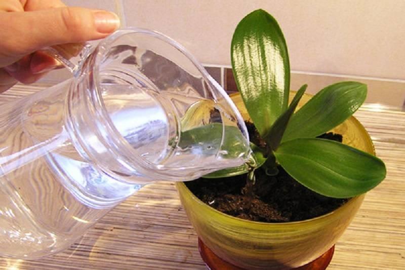как правильно удобрять орхидеи