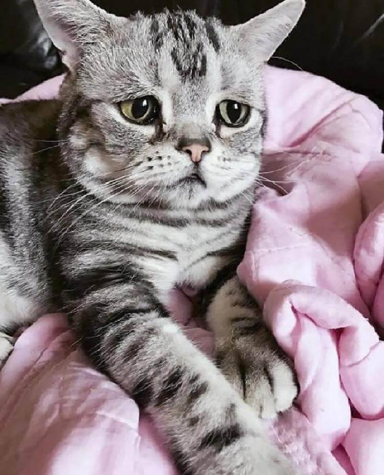 Луху — самая грустная кошка в мире