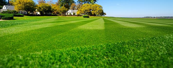 Уход за газоном, который сделает вашу лужайку не хуже, чем в Букингемском дворце