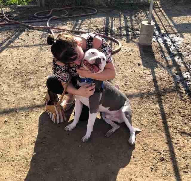 Собака воссоединилась со своей хозяйкой спустя три года после пропажи