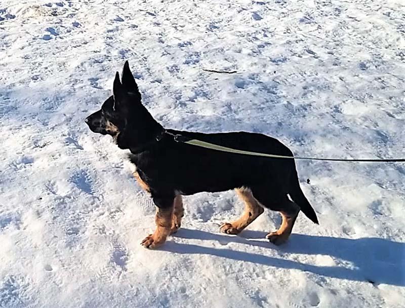 Кажется, я мечтала о прогулках со щенком?
