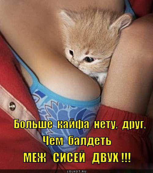 """""""ЛОЛКОТЫ"""". ФОТО КОТОВ С ПРИКОЛЬНЫМИ НАДПИСЯМИ-9."""