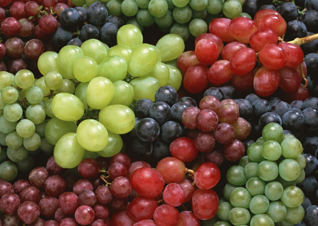 Выбираем саженец винограда - по какому принципу?