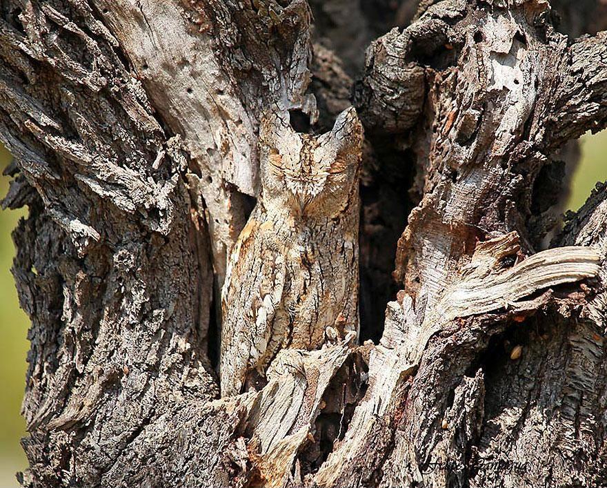 Camouflage01 Животные   мастера маскировки