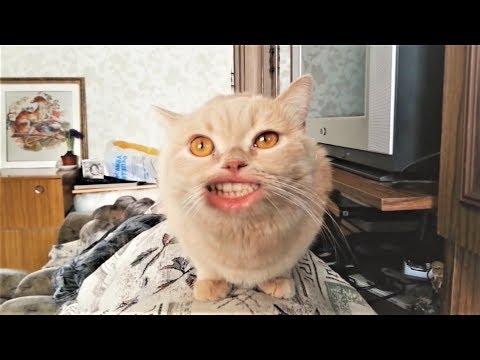 Коты поют очень круто  Смешная песня про Кота