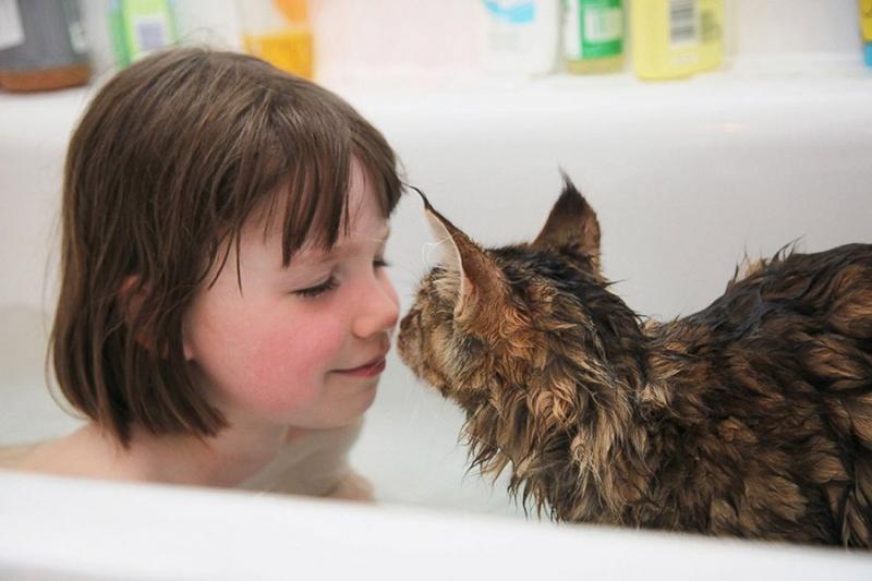 кошка помогает девочке с аутизмом