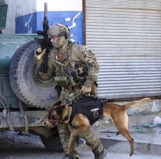 Переносной тактический собак