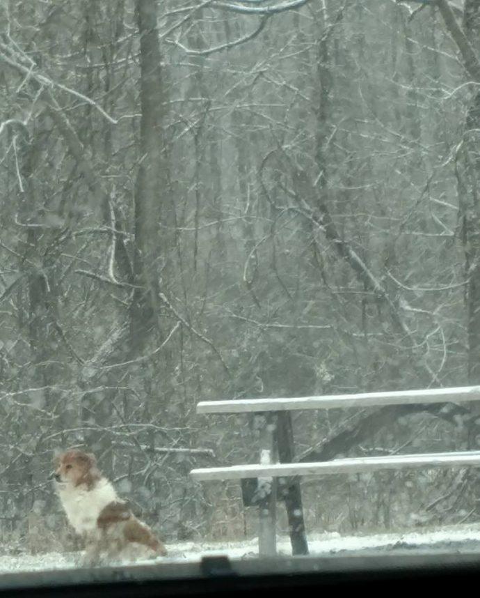 """""""Шёл сильный снег, а она всё сидела и смотрела перед собой…"""" Собака отказывалась покидать парк, где её бросили хозяева"""