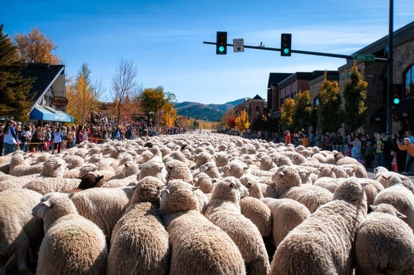 terraoko 2015012702 11 Праздник Трейлинг овец в Айдахо.