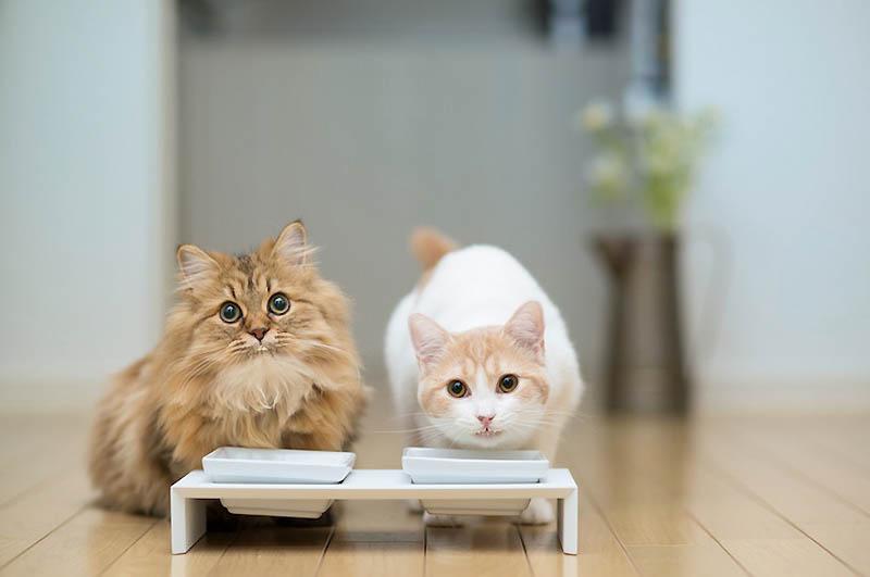 Самые мимимишные друзья – Дейзи и Ханна